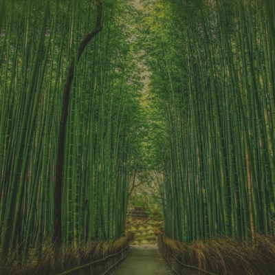 Resilience: The Wisdom Of Bamboo